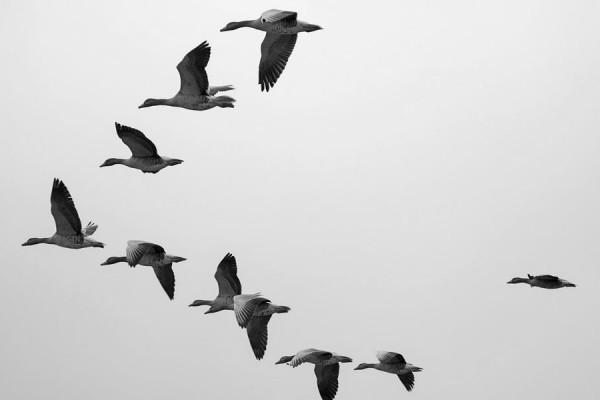 cassandra-migration-tool_detailed